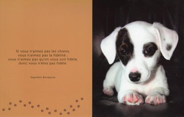 citations sur le chien - Page 2 14ff4610