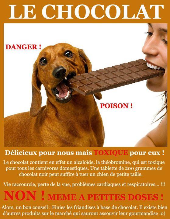 Les animaux et le chocolat 19455210