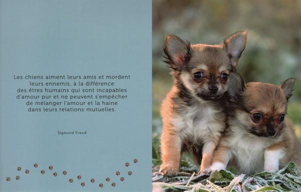citations sur le chien - Page 2 26e24610