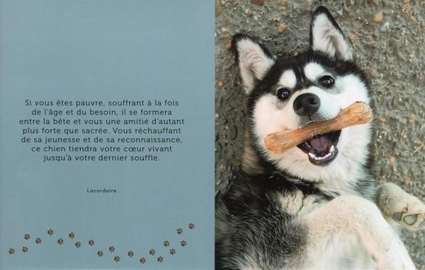 citations sur le chien - Page 2 2d860d10
