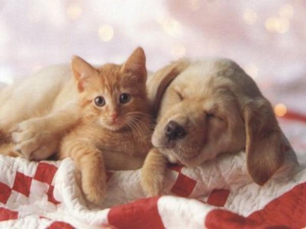 """S""""entendre comme chien et chat-LA VÉRITÉ en vidéos et en images - Page 2 3_tala10"""