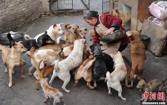 gens sauvant des animaux - Page 2 51628110