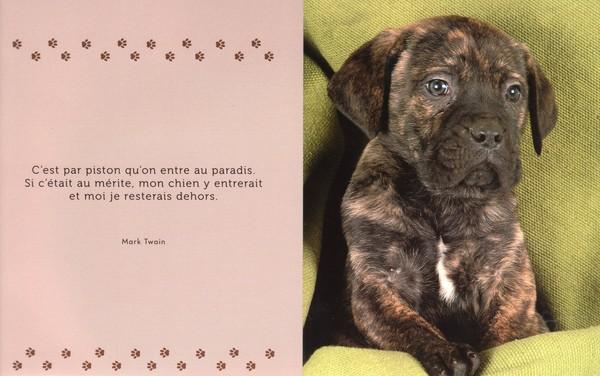 citations sur le chien - Page 2 51ea5110