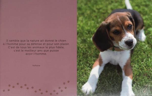 citations sur le chien - Page 2 5d734a10