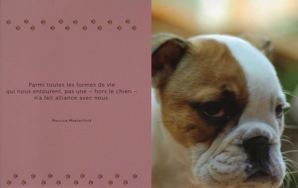 citations sur le chien - Page 2 5f91a510