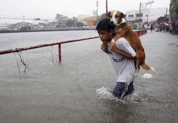 gens sauvant des animaux - Page 2 67217611