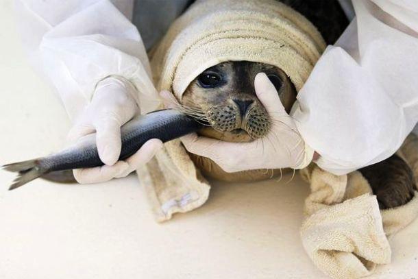 gens sauvant des animaux - Page 2 89420310