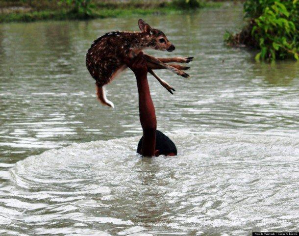 gens sauvant des animaux - Page 2 92028510