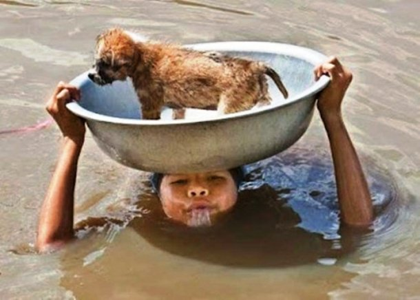 gens sauvant des animaux - Page 2 93668510