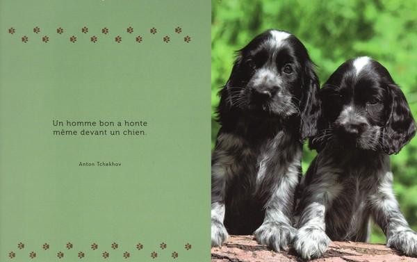 citations sur le chien - Page 2 B2607810