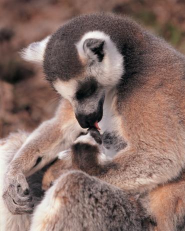 Les mamans et leur bébé Bebe-a11