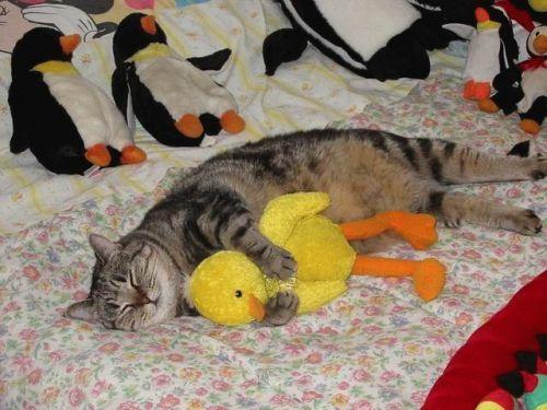 Jamais sans mon doudou - Page 2 Cats-l10