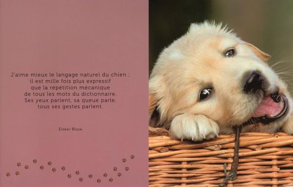 citations sur le chien - Page 2 Ccf25210