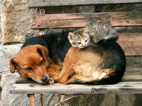 """S""""entendre comme chien et chat-LA VÉRITÉ en vidéos et en images - Page 2 Chat-q11"""