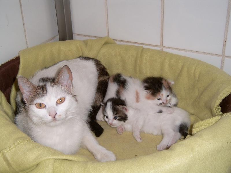 Les mamans et leur bébé Copeli10