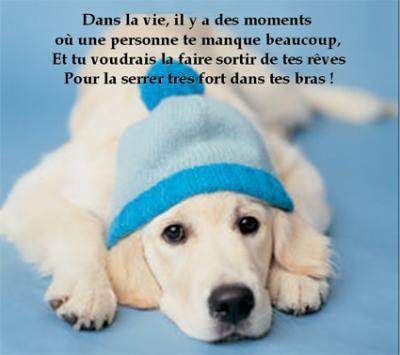 citations sur le chien - Page 2 D656af10