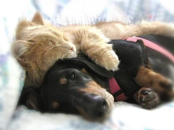 """S""""entendre comme chien et chat-LA VÉRITÉ en vidéos et en images - Page 2 Dogs-c10"""