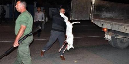 massacre des chiens et chats au maroc  7d02c910