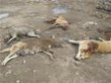 Sit-in en faveur des animaux au Maroc 10377211
