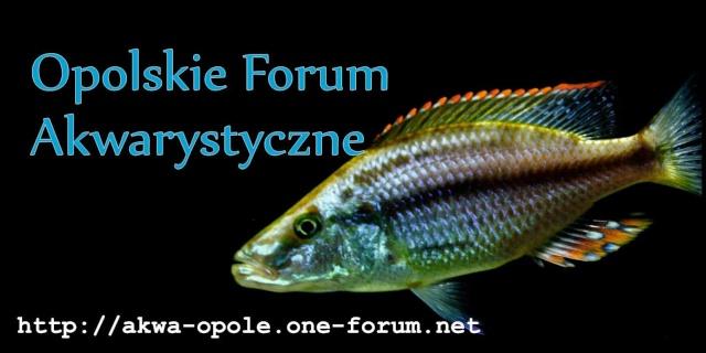 Akwarystyczne Opole