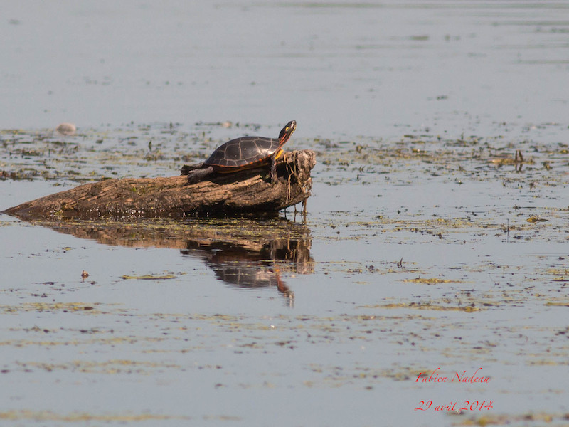 Tortue Img_8310