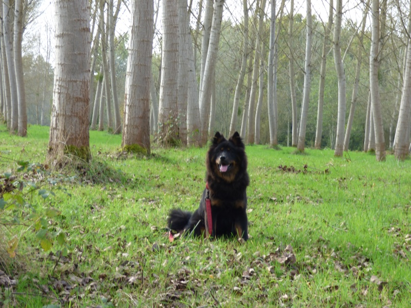 Promenade en forêt P1010115