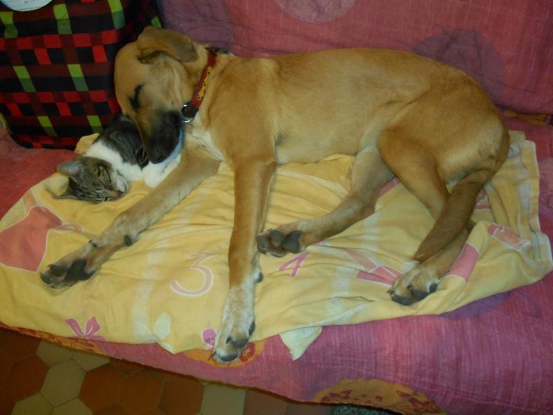 Myrtille sert d'oreiller à Manchitas Dscn1410