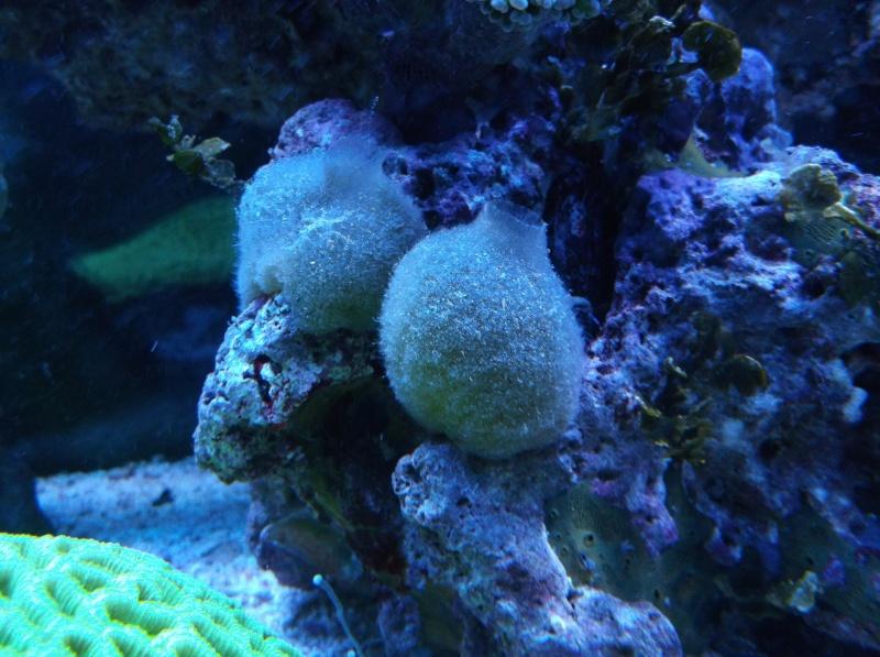 Household Sponges Dscf6311