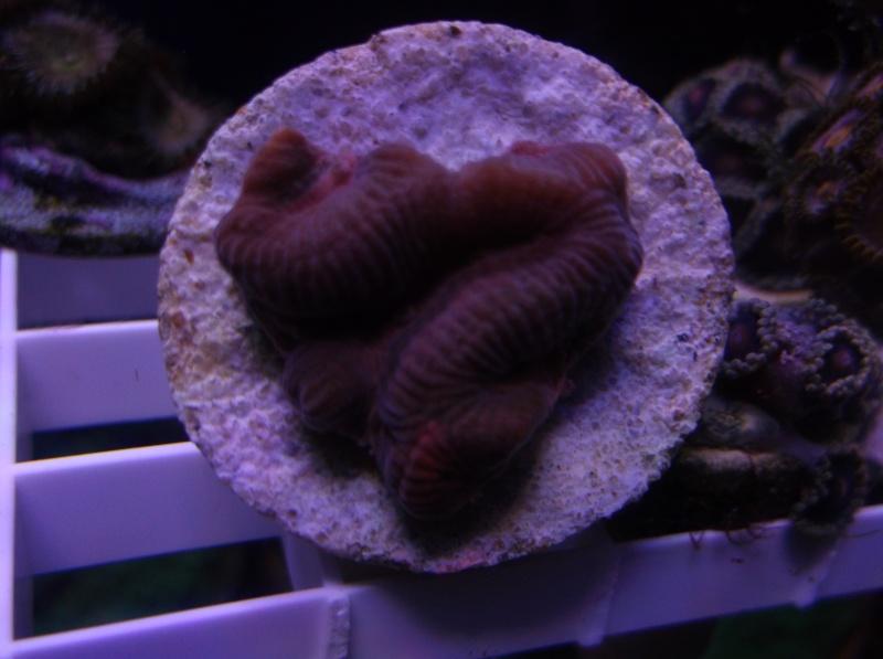 Creative Coral Cuts Dscf9714