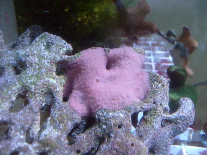 Household Sponges Pictur11