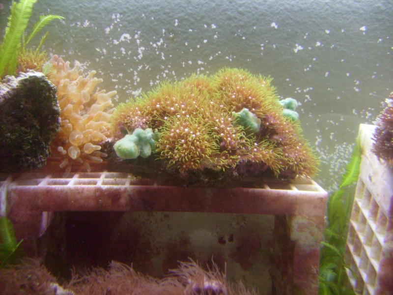 Household Sponges Pictur17