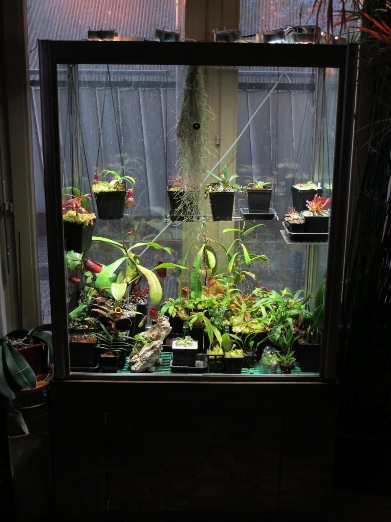 Construction terrarium lowland pour Nepenthes Lowlan10