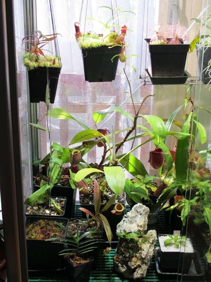 Construction terrarium lowland pour Nepenthes Lowlan11