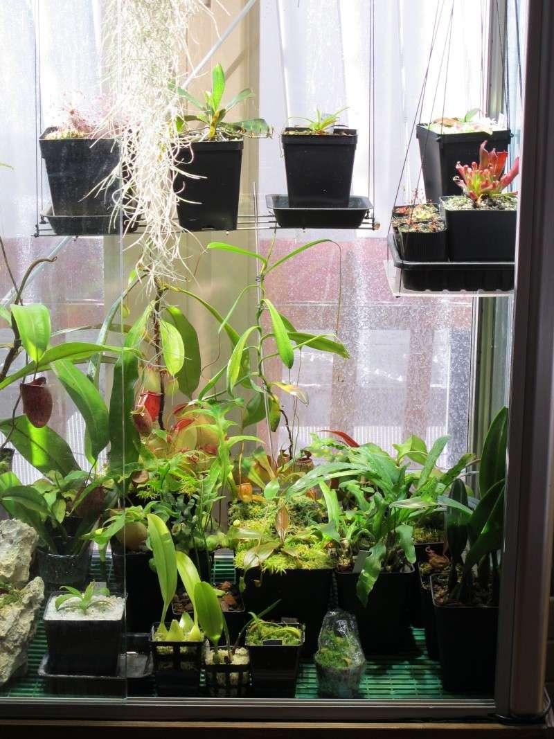 Construction terrarium lowland pour Nepenthes Lowlan12