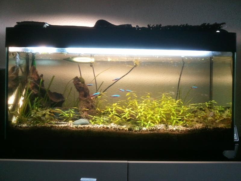 Batterie betta/crevettes/killi 6x20l sur vase de catappa et autre Image11