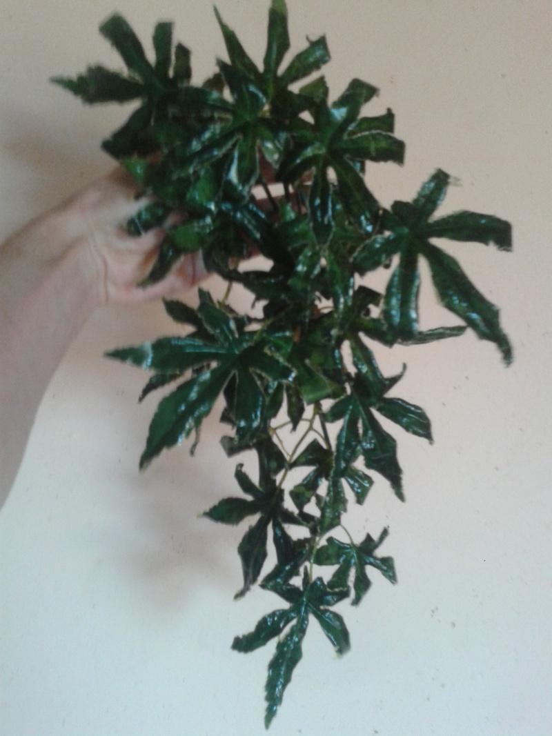 nouvelles plantes 2014-010