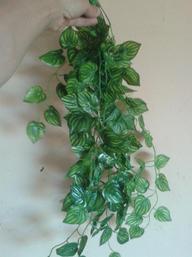 nouvelles plantes 2014-012