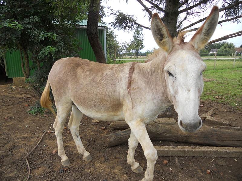 ZEBULON - ONC âne né en 2008 - adopté en octobre 2010 par Anita - Page 5 Dscn2624