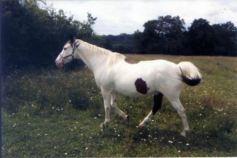 GERONIMO - hongre né en 1990 - annonce désactivée à la demande de la propriétaire  Geroni11