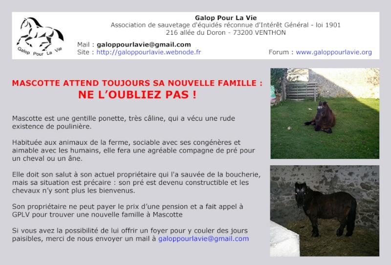 MASCOTTE - ONC poney née en 1993 - adoptée en octobre 2014 par Elsa - Page 2 Mascot14
