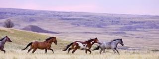 Horse Plains