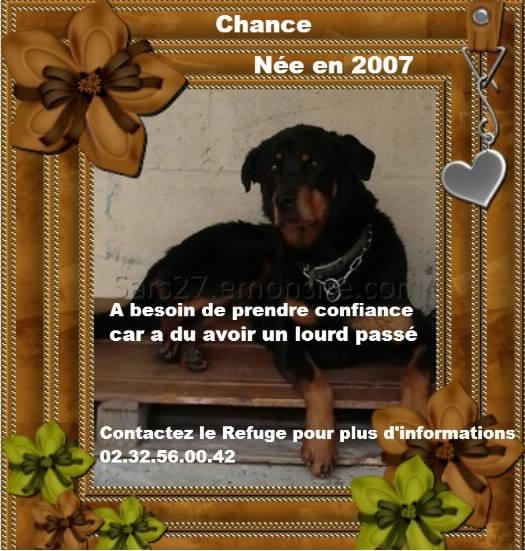 CHANCE - beauceron femelle  12 ans (9 ans de refuge)   SARS Refuge de l'Esperance à Appeville Annebault (27) 11503810