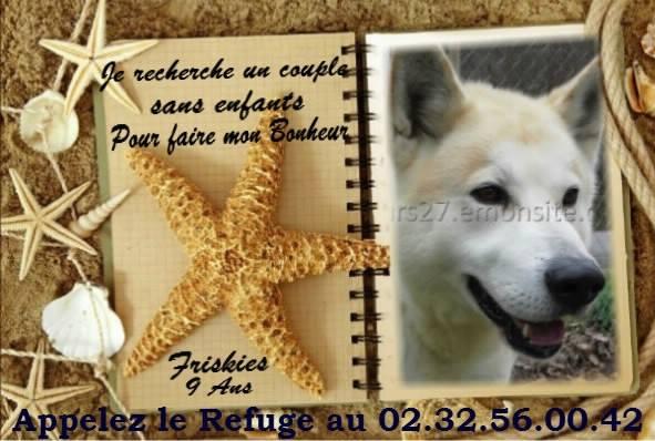 FRISKEES - husky 10 ans - Refuge de l'Esperance à Appeville Annebault (27) 19667910