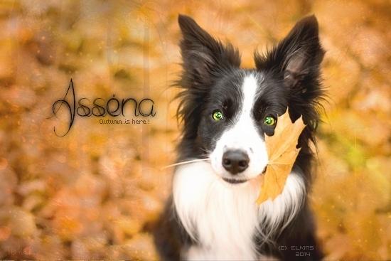 Assëna |||| Live the life. Copie_14