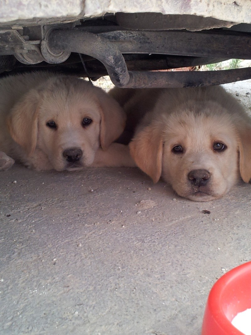 Another 2 puppies dumped in Fuente Nueva 20140614