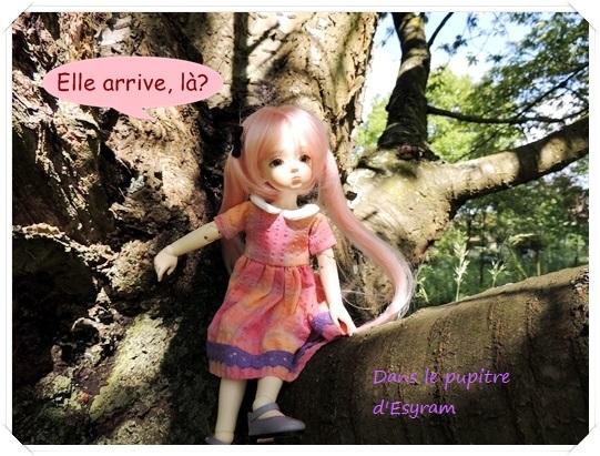 Dune et Violette, mes petites fées gourmandes page 2 054_du13