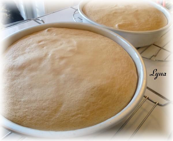 Gâteau éponge Gyteau20