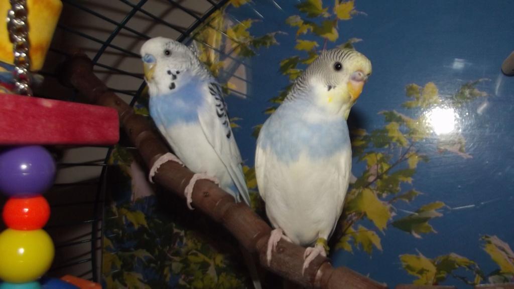 Mâle ou femelle? Dscf9412