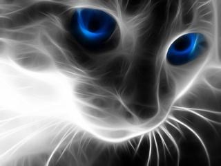 Message de mon chat... de l'au-delà Chat_l10