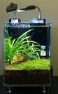 Aquariofilia --- Mundo dos Aquários 111